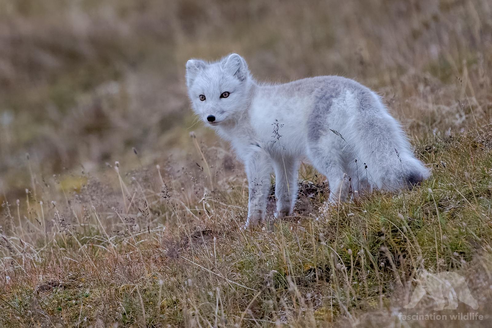 Spitsbergen8532_DxO