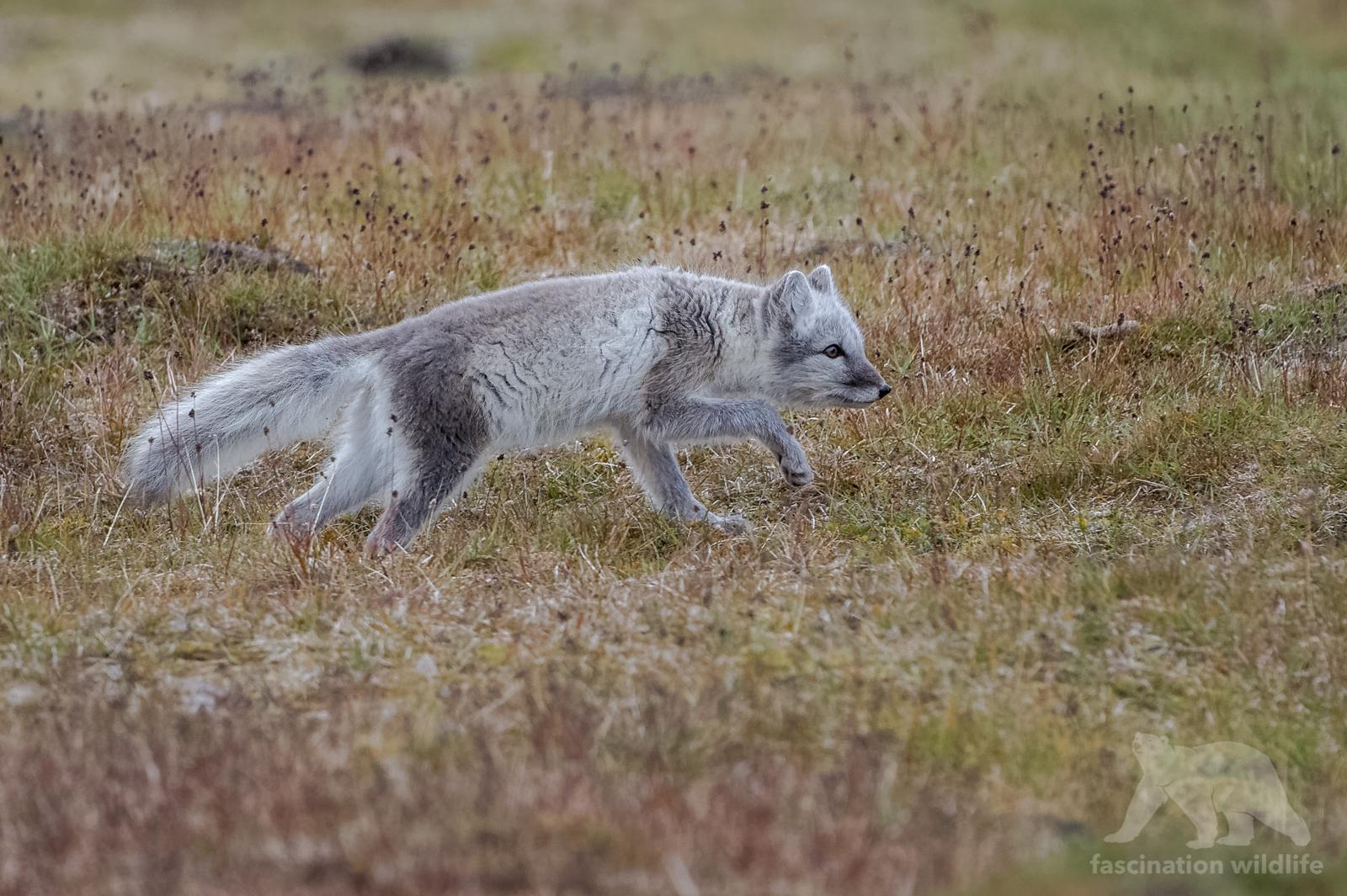 Spitsbergen9105_DxO