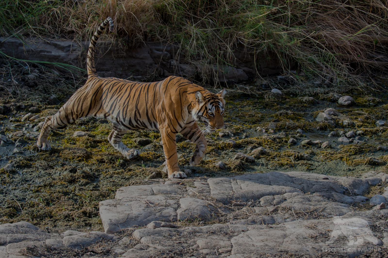 wildIndia0267