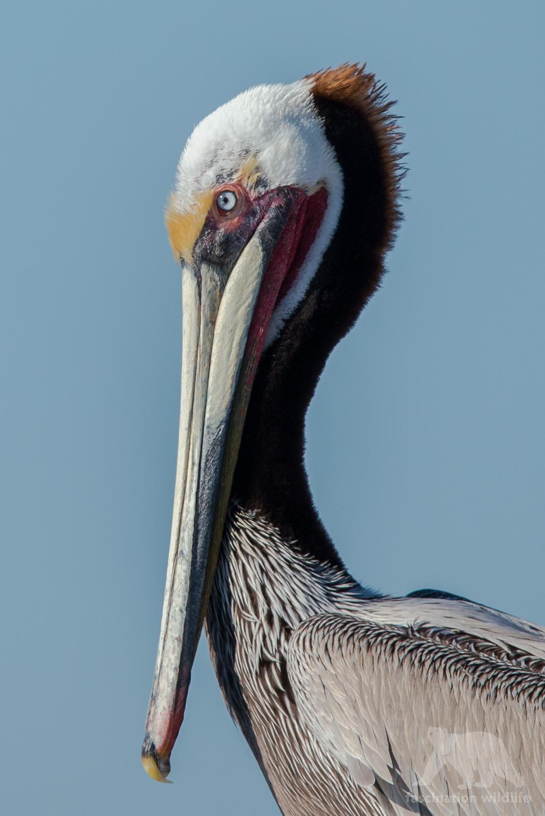calbirds1