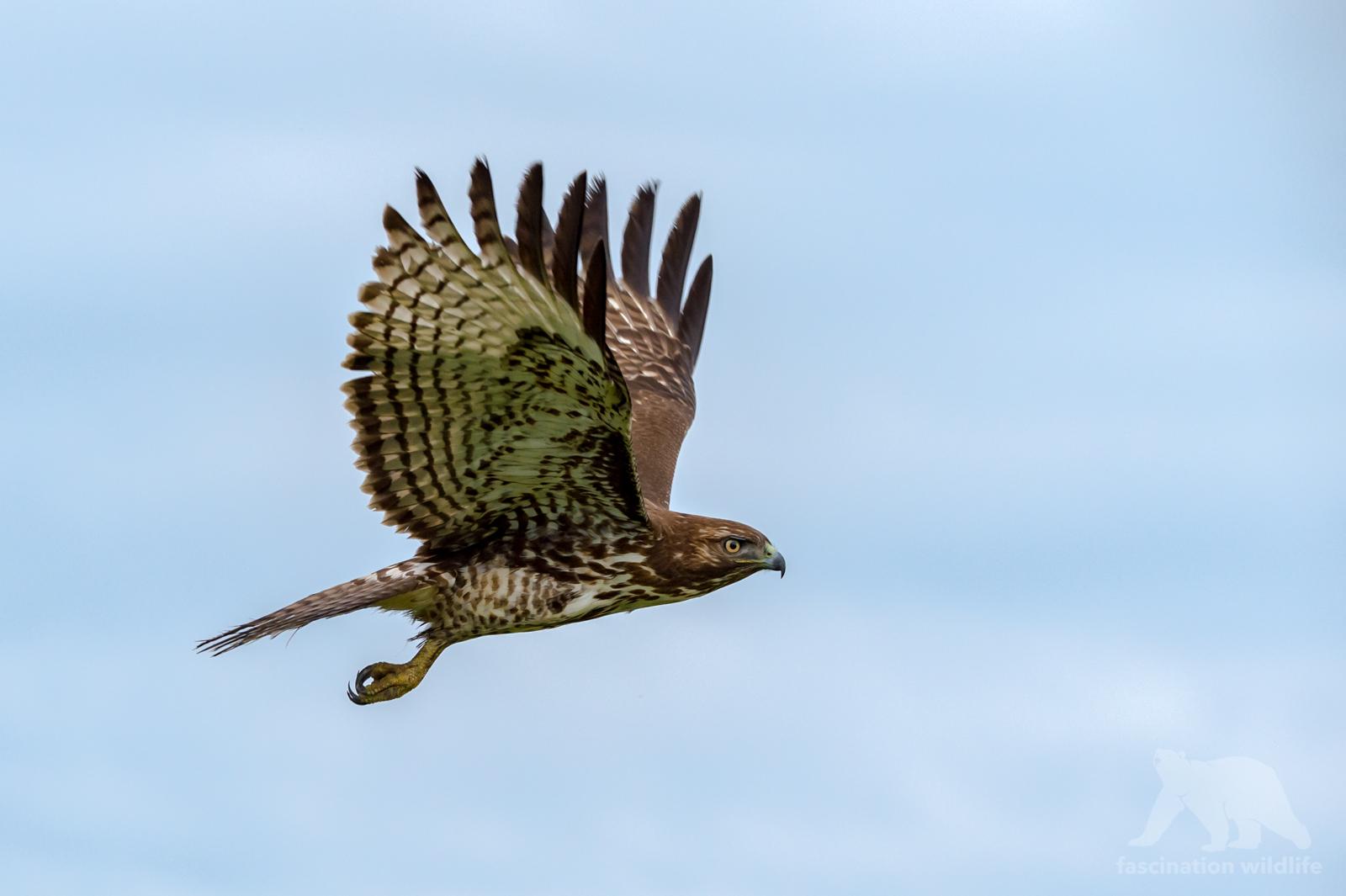 calbirds2161