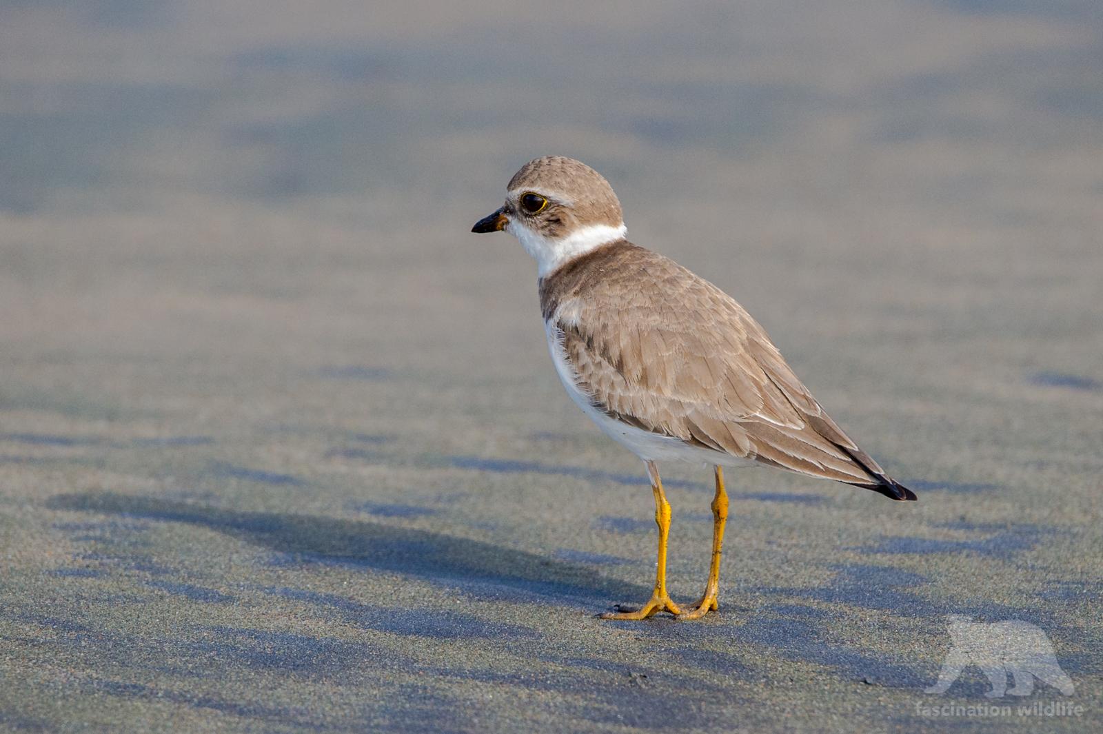 calbirds5108