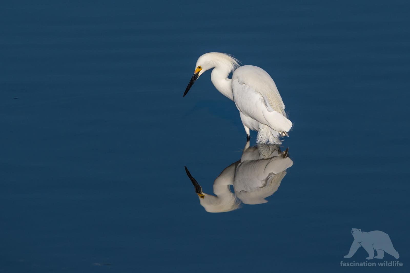 calbirds5152