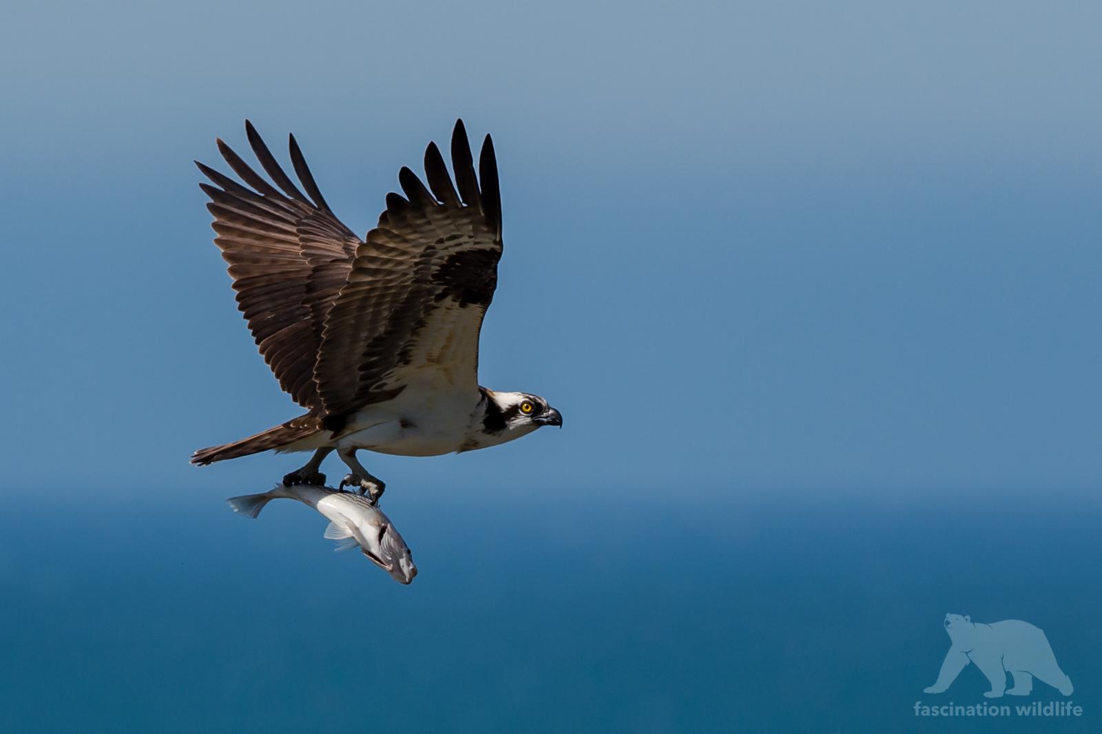 calbirds7129