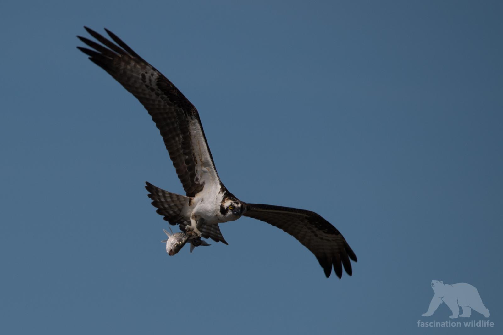 calbirds7147
