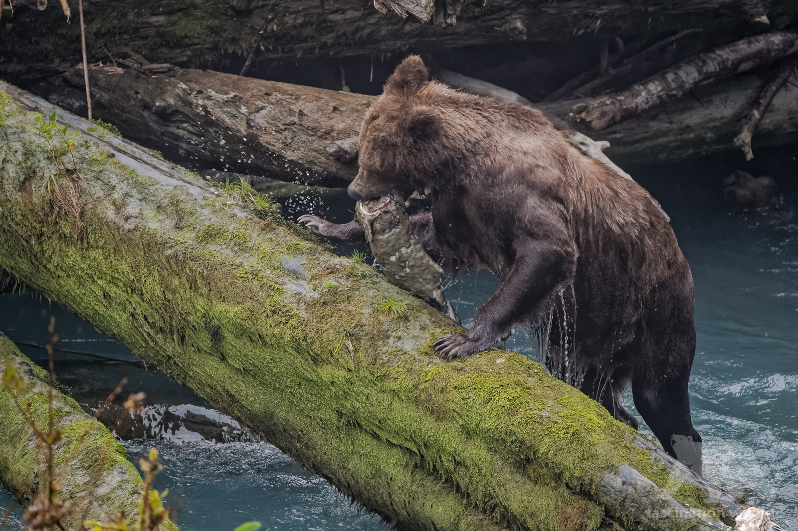 grizzly1909_DxO