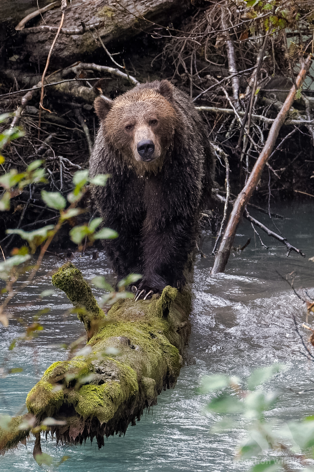 grizzly3257_DxO