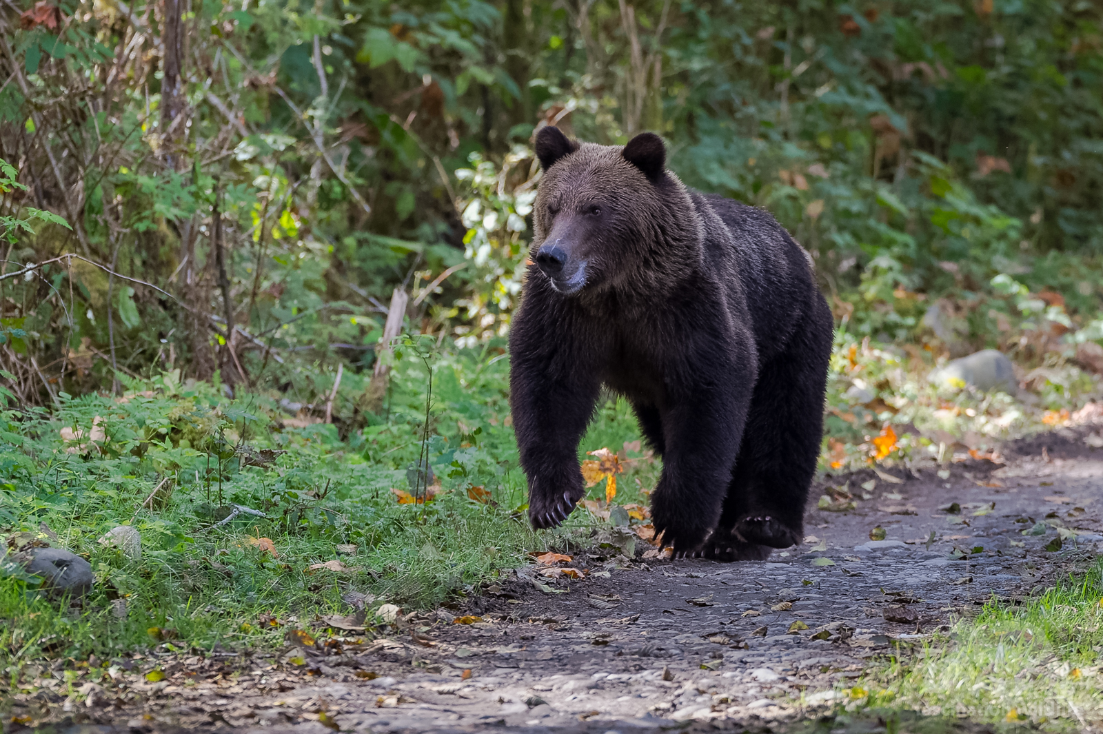 grizzly3645_DxO