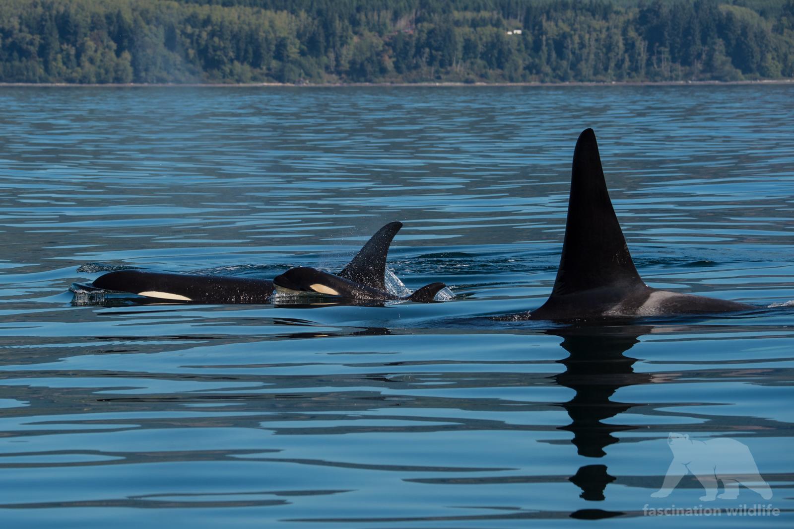 orca0114