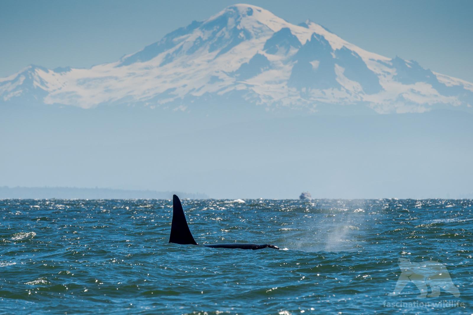 orca_3590