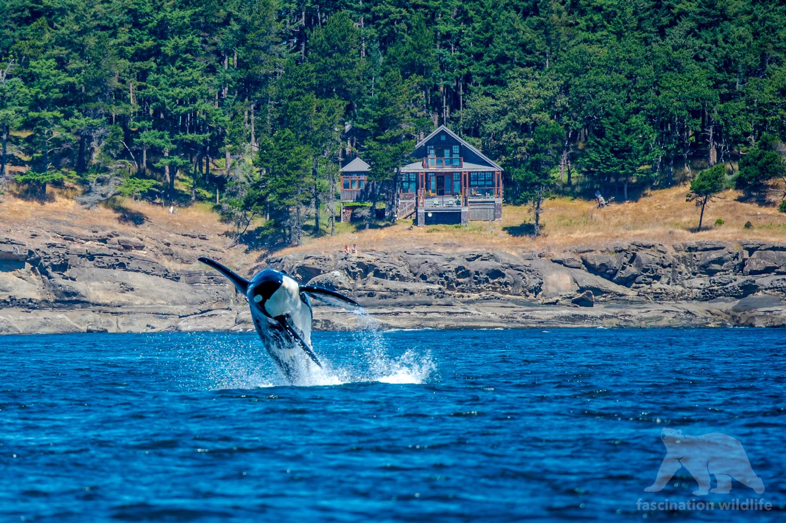 orca_3832