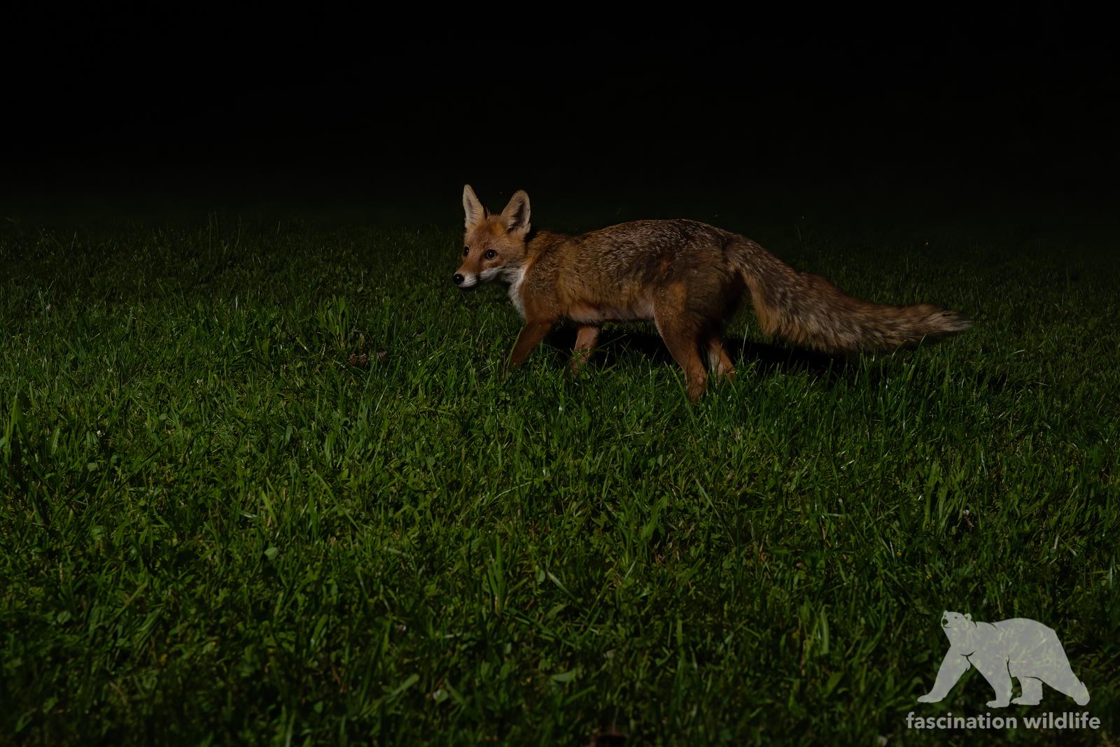 foxcam4