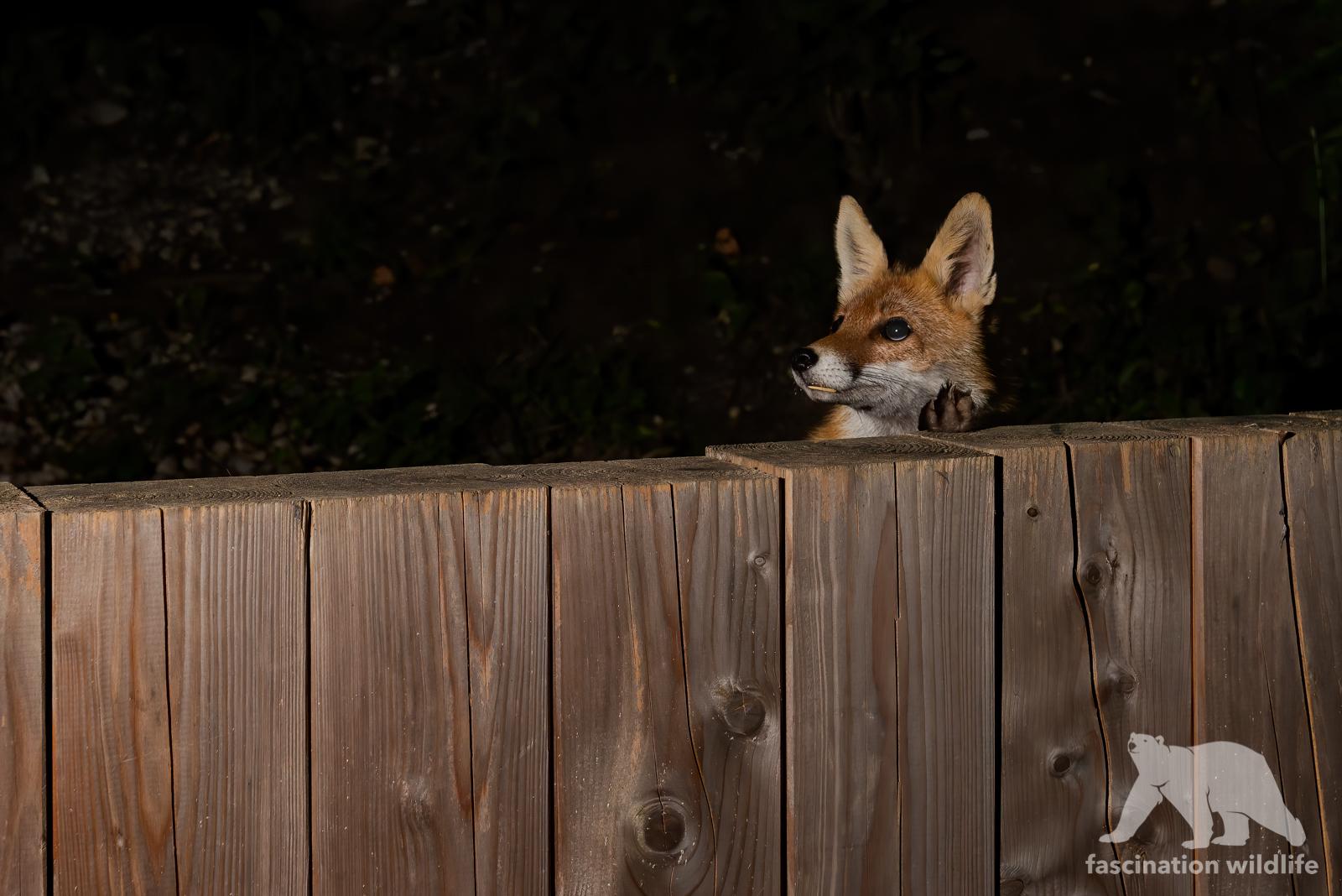 foxcam5