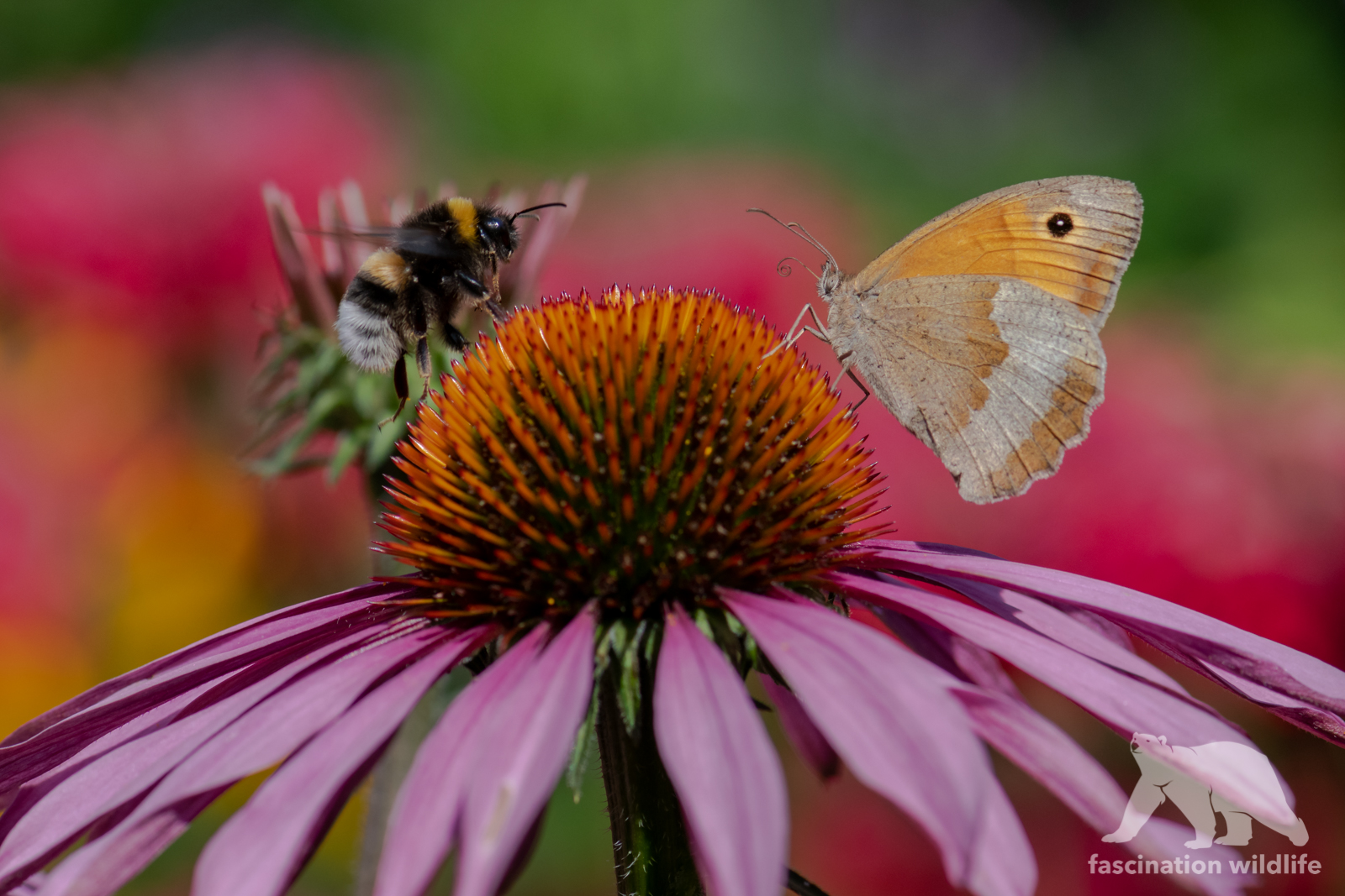 Bumblebee & Butterfly